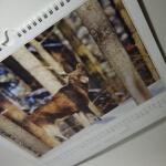Kalender mit Elch Bildern