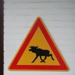 Ein Achtung Elche Warnschild