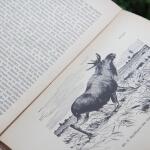 Bild aus dem Buch Wißent und Elch