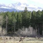 Elche in der Landschaft Colorados